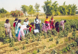 IHO teaching village women about agriculture
